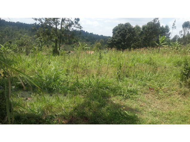 14 Prime Plot in Ruaka