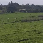 Limuru-2 Acres Tea Plantantion